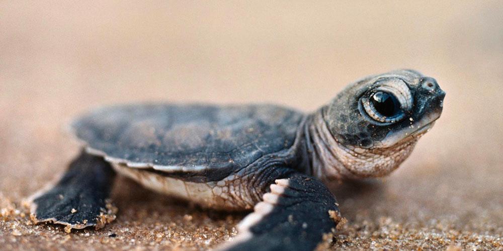 Vasche e laghetti per tartarughe guida all 39 acquisto e 5 for Vasche da interrare per tartarughe